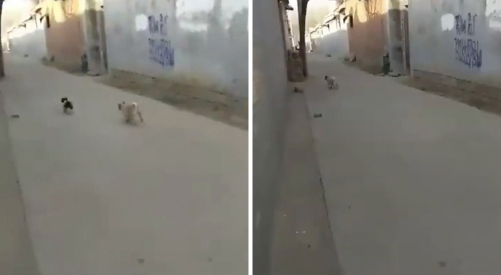 Pug espanta perro