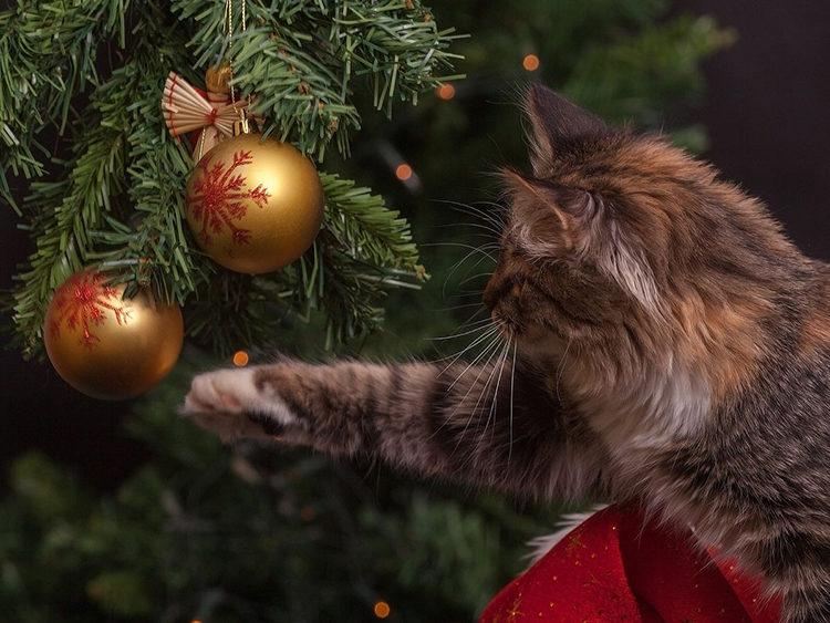 Argos Árbol anti gatos