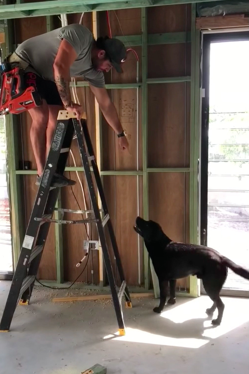Labrador Constructor