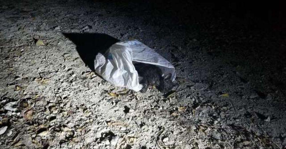 Policía ve una bolsa tirada y agradece haber llegado a tiempo para salvar a un pequeño gatito