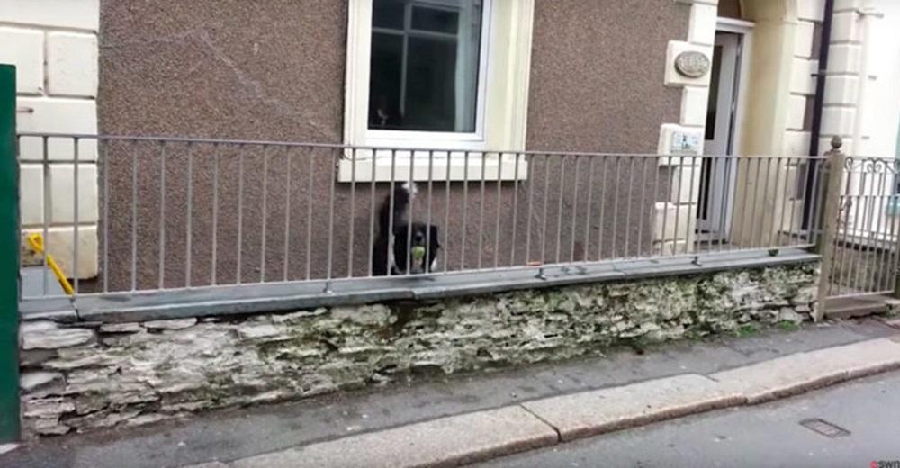 Transeúntes graban al perro que pasa triste y solito detrás de una reja en su casa sin gente