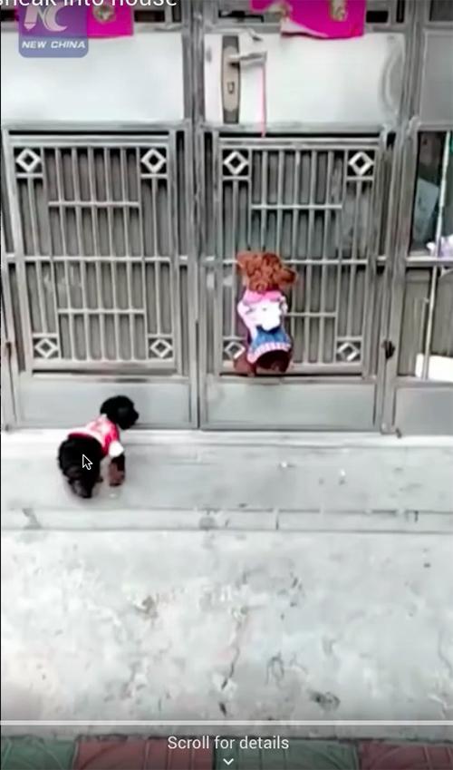 Perros abren puerta China