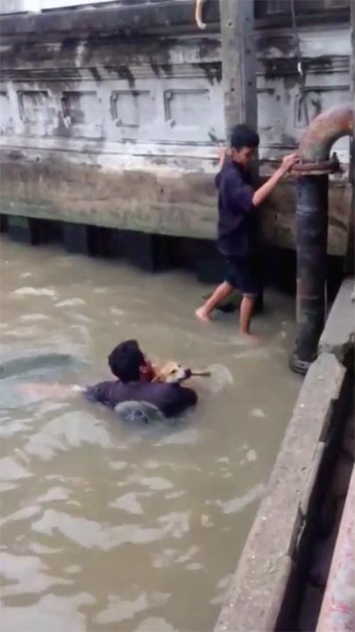 Rescate de perro en Bangkok