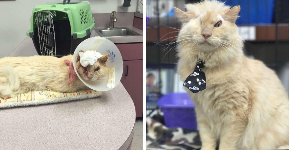 Un gato sobrevive a quemaduras de ácido y se convierte en toda una inspiración de vida