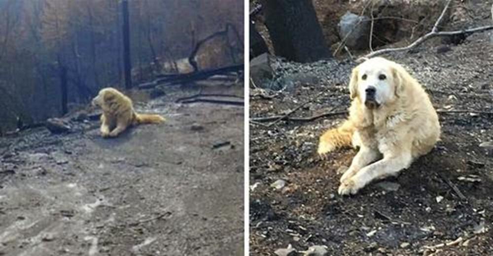 El perro que esperó durante un mes en la casa incendiada a que su familia regresara