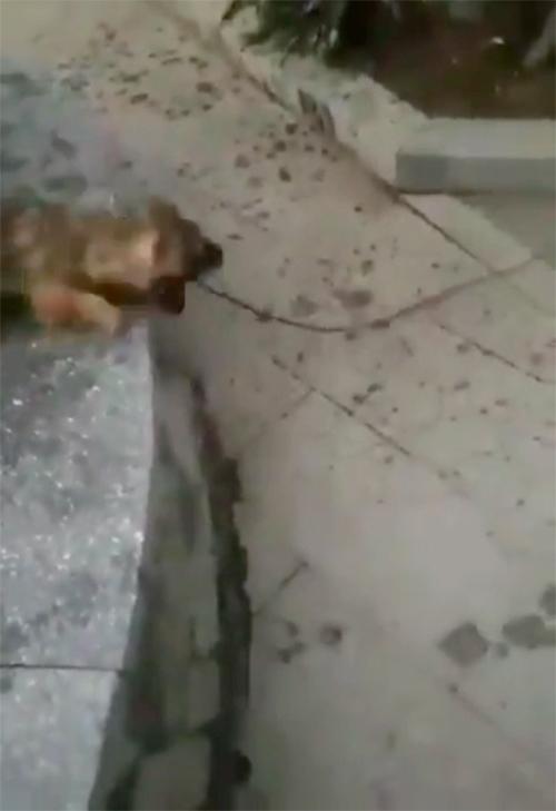 Perro rescata gato Turquía