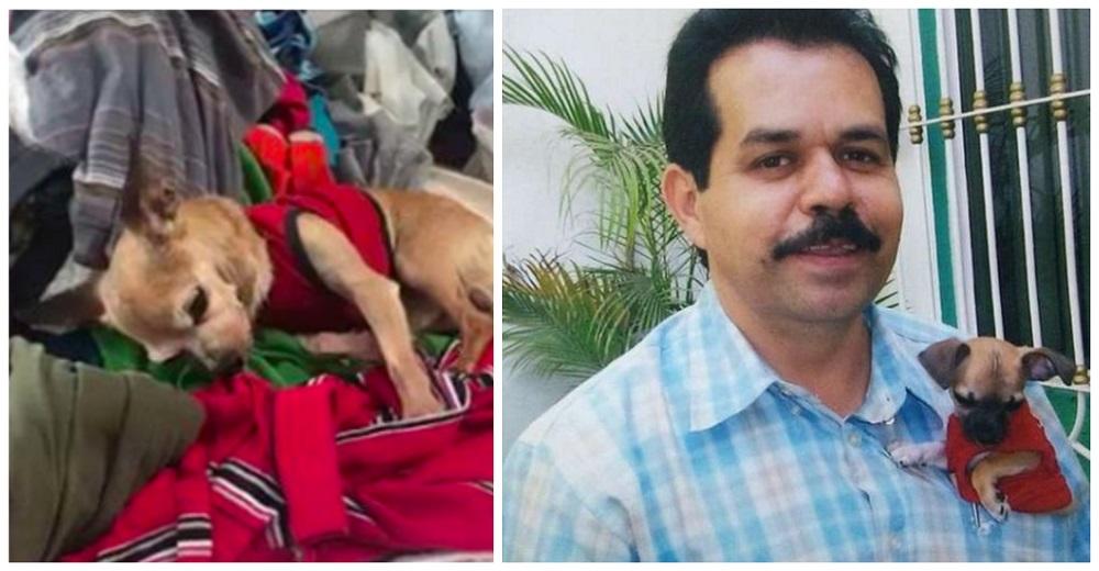 Un perrito desconsolado no se puede separar de la ropa que encontró, olía a su dueño fallecido