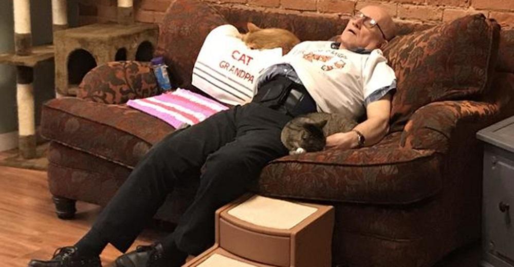 Abuelito que acababa quedándose dormido con los gatitos, recauda 100.000 dólares para el refugio