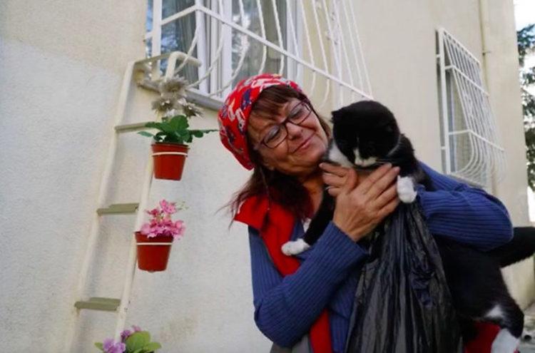 Albergue de gatos Turquía