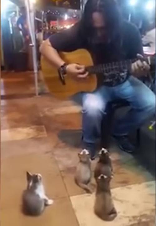 Cantante Malasia con gatitos