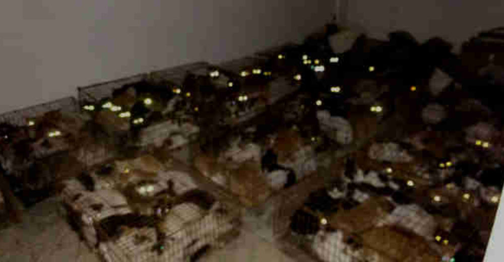 Buscaban a un gato perdido, encienden las linternas y encuentran a cientos en el peor infierno