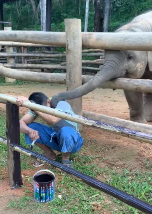 Elefante y cuidador Tailandia