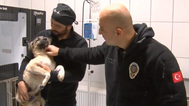 Rescate de perro en Turquía
