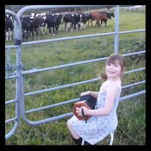 Niña acordeón hipnotiza vacas