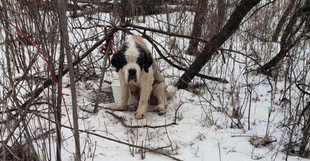 Una perrita anciana sobrevive de milagro tras dos semanas solita en la nieve