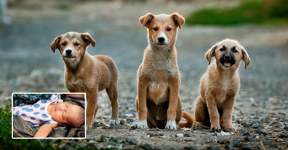 Su vida peligraba tras ser tirada en la basura pero estos héroes caninos llegaron justo a tiempo
