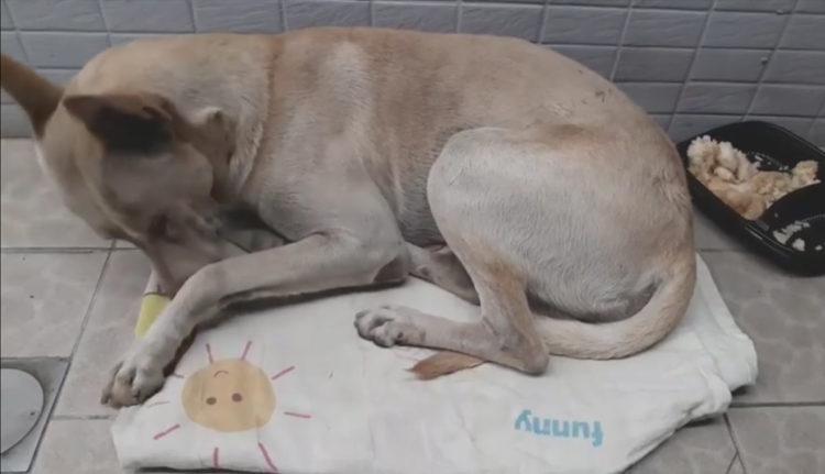 Perro abandonado Taiwán