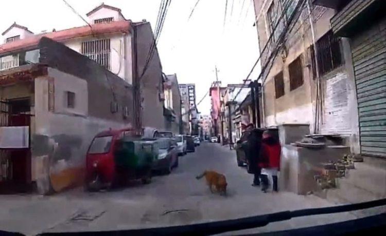 perro-guia-ambulancia1-1-750x460