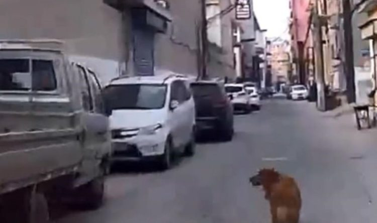 perro-guia-ambulancia2-1-750x444