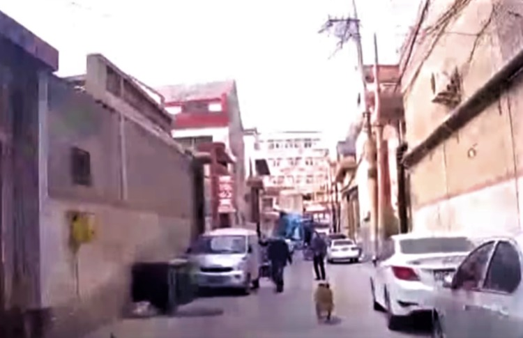 perro-guia-ambulancia4-1-750x485