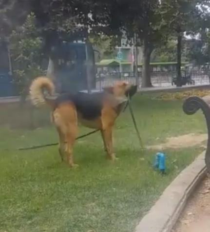 perros-manguera-3