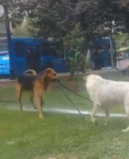 perros-manguera-4