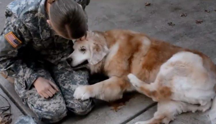 Soldado y su perro