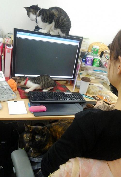 Gatos empresa Japón