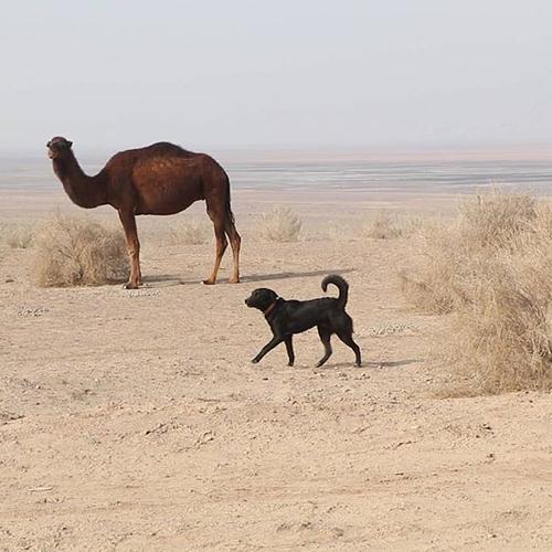 Luke perro viajero