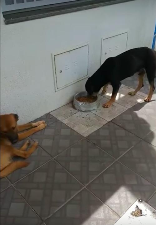 Perros hacen cola Brasil