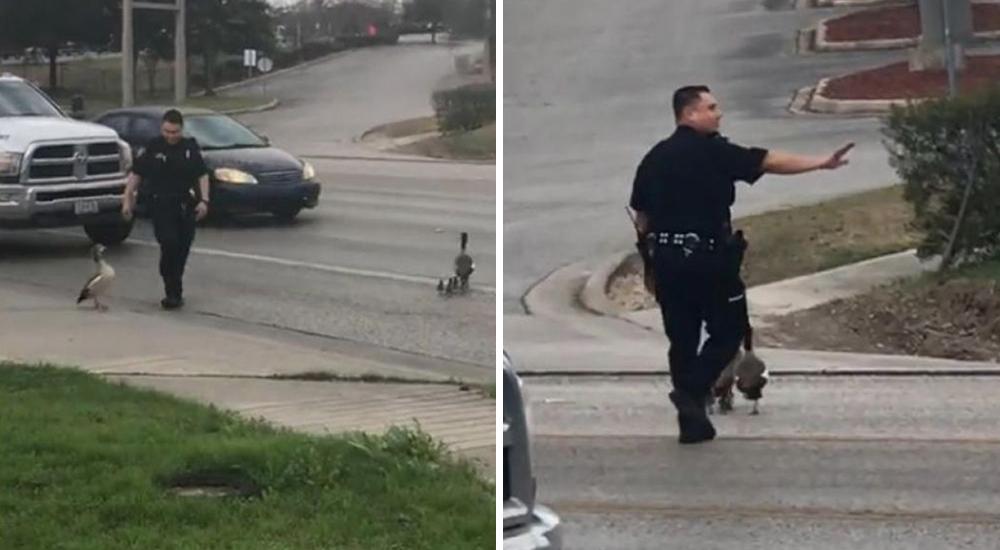 Policía ayuda a patos
