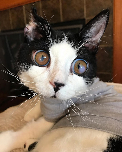Porg gato ojos enormes
