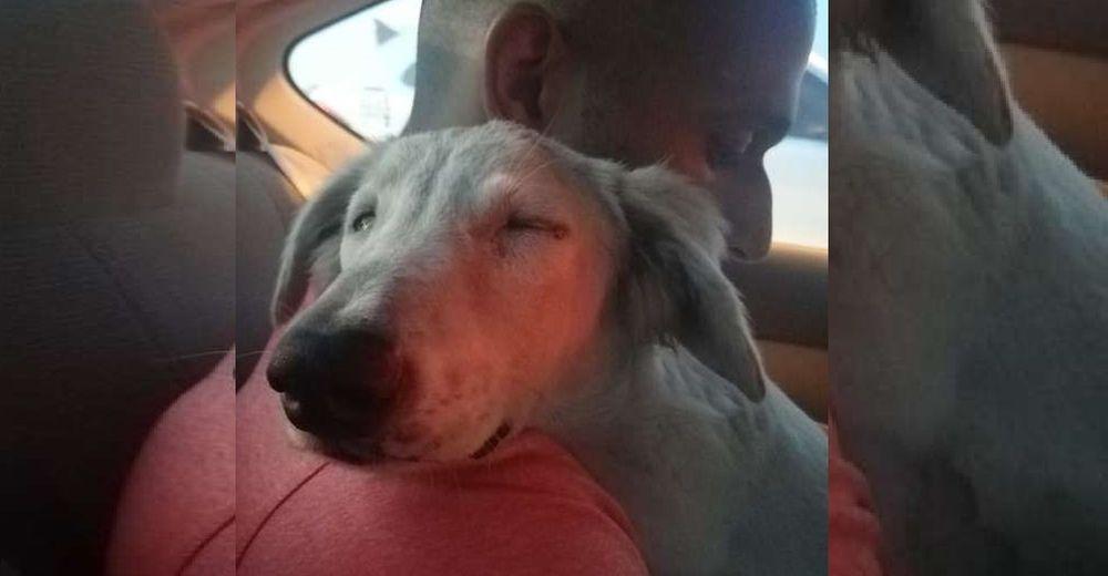 Perrito callejero se relaja por primera vez cuando se da cuenta de que se lo llevan a casa