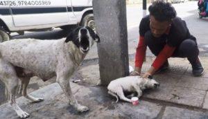 Tras llorar angustiada una mamá perrita encuentra la ayuda que necesitaba para su cachorrito