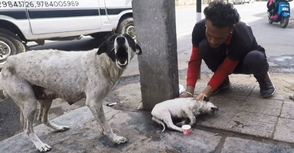 Una mamá perrita lloraba desesperada suplicando ayuda para su cachorrito herido