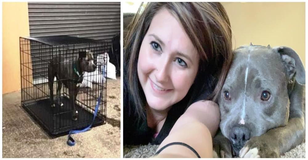 El único perrito rechazado en un evento de adopción, consigue un hogar para siempre