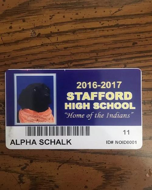 Alpha perro anuario escolar
