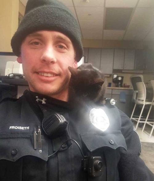 Donut gatito Wisconsin
