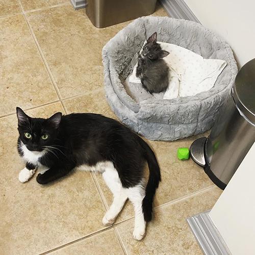 Familia de gatitos en peligro