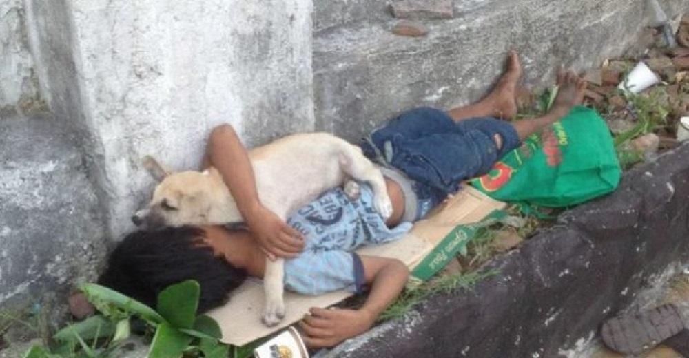 Niño de la calle adopta un perro sin hogar y se acurrucan juntos para no estar solitos