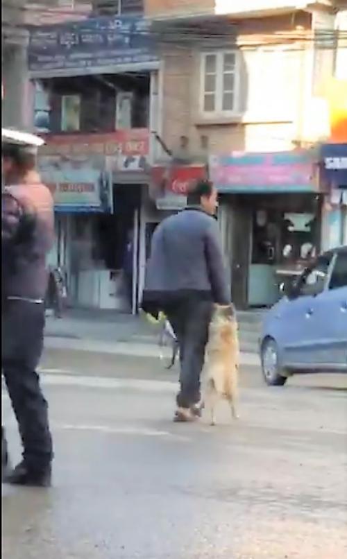 Un Perrito Toma De La Mano A Su Humano Para Cruzar La Calle