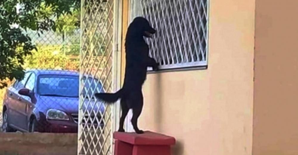 Fiel perrito caminó kilómetros hasta la escuela de su dueño para verlo estudiar desde la ventana