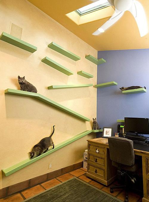 Peter Cohen Casa de Gatos