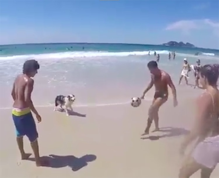 Scoth perro juega al fútbol en Brasil