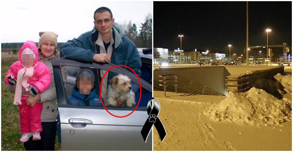 No pudieron viajar con su perrito y lo abandonaron afuera del aeropuerto a -30º C