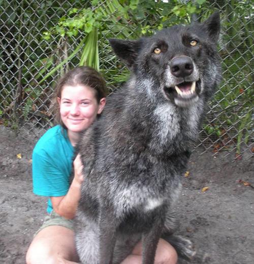 Yuki lobo mestizo