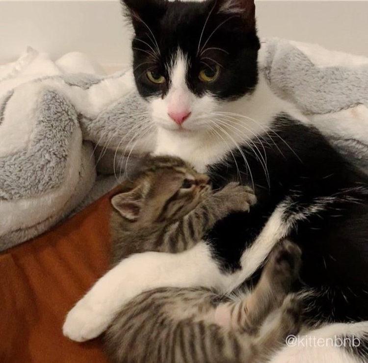 Claudia y gatitos NY