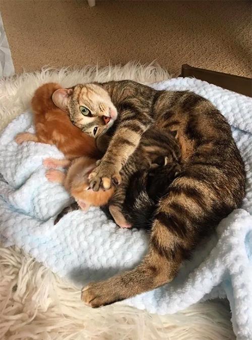 Gata se reúne con sus gatitos