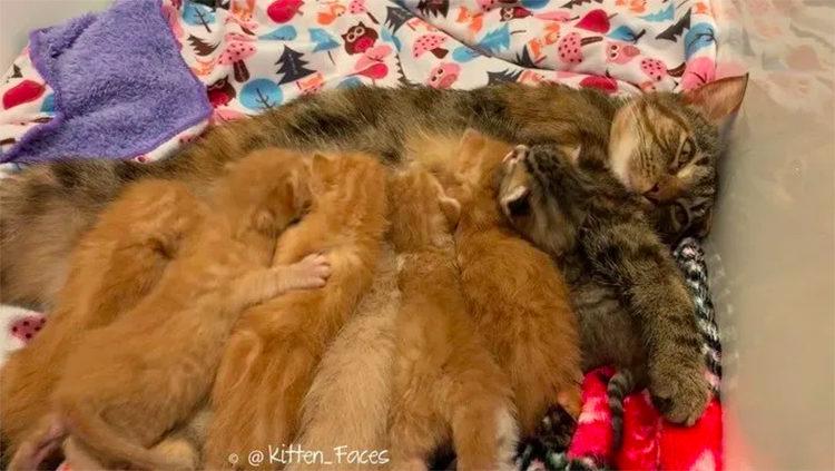 Gran familia de gatitos