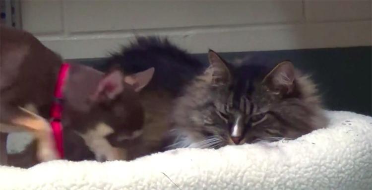 Leila y Kitty